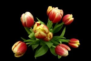 Bukiet czerwono- żółtych tulipanów